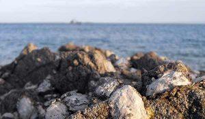 Les huîtres en Bretagne ?